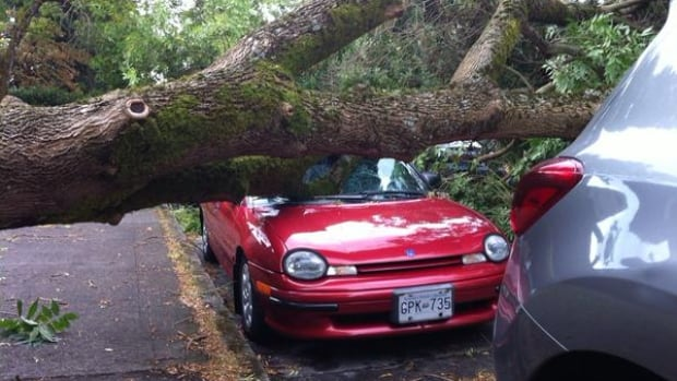 Storm winds have brought trees down on roads, cars and at least one person in Metro Vancouver.