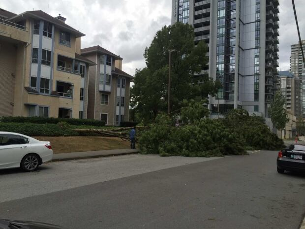 Downed Tree Coquitlam