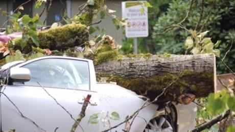 Surrey tree hits car