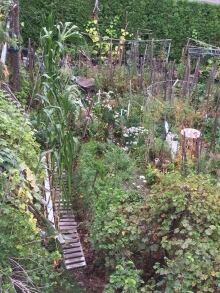 Daniel Tomelin's Garden