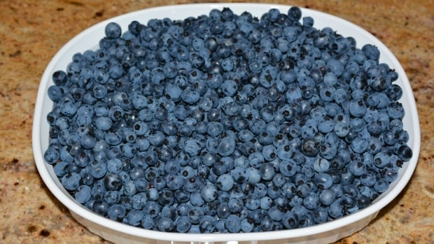 Oxford Frozen Foods is the largest supplier of frozen wild blueberries in the world.