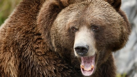Free safety event stresses importance of bear spray