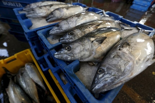 PERU-FISHING/