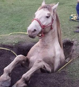 Daisy horse well