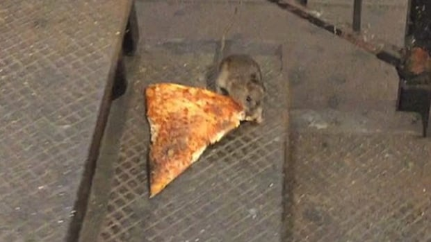 By 4 p.m. ET Monday afternoon, #PizzaRat was trending on Twitter worldwide, as well as in both Canada and the U.S.