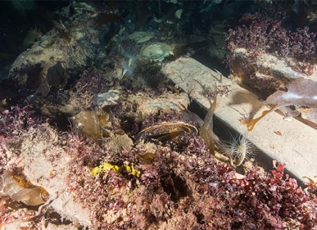 Marine biology on the wreck of HMS Erebus, August 2015
