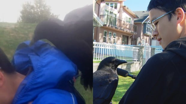 Steven Huynh was reunited with a curious crow after he thought it had attacked him on Friday.