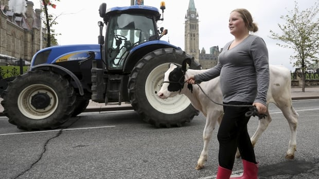A dairy farmer walks with her cow during during last week's protest against the Trans-Pacific Partnership trade agreement in front of Parliament Hill in Ottawa. Details of the trade deal now seem less alarming to the dairy sector.