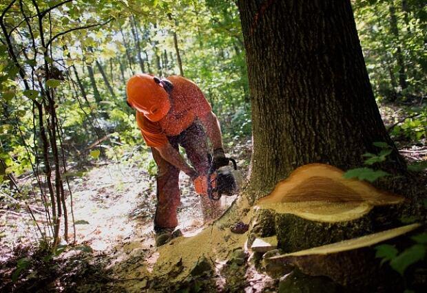 Logging company failed audit