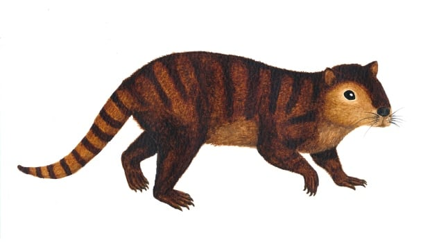 This is a reconstruction of Kimbetopsalis simmonsae, a metre-long, plant-eating, rodent-like mammal boasting buck-toothed incisors like a beaver that lived just a few hundred thousand years after the dinosaurs went extinct.