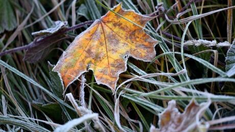 Autumn Linum GERMANY frost Oct 11 2015