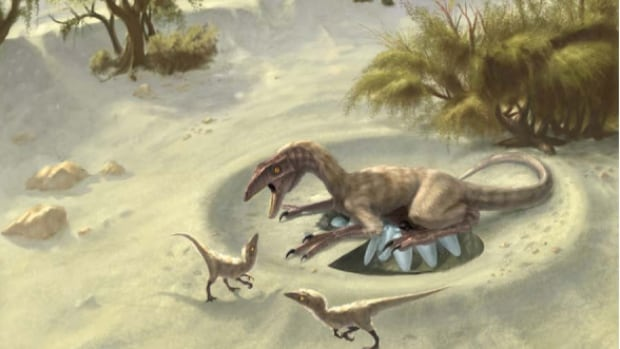 Bird-like oviraptors from Mongolia, pictured in an artists' conception, had body temperatures that averaged 31.9 C, much lower than modern birds' average of 36 to 43 C.