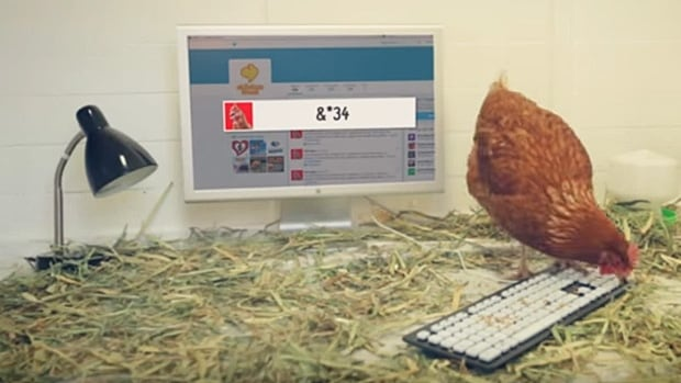"""Betty the chicken tweeted her first full word on Thursday, Oct. 15. It was """"bum."""""""