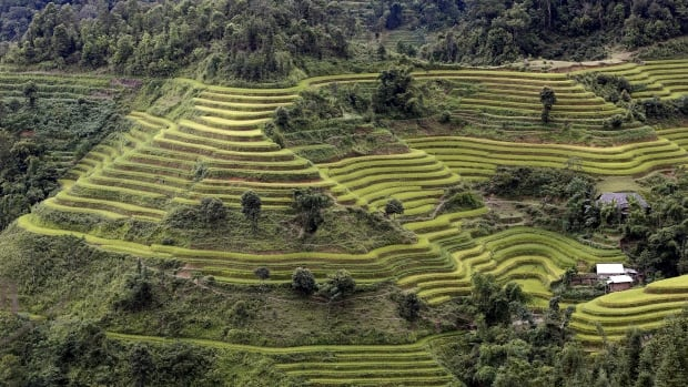 The ancient terraced rice paddies of Southeast Asia required the management of an entire watershed and were far beyond the ability of any single farmer. Sometimes government spending is just a waste, says Don Pittis, but wise government investment can make everyone richer.
