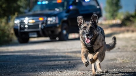 No charges in Nanaimo police dog incident that left man badly injured