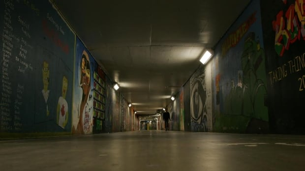 Bats routinely find their way into the maze of tunnels underneath Carleton University in Ottawa.