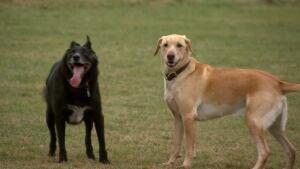 Kilcona Park dogs