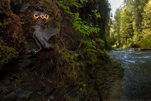 Creekside Nursery - Connor Stefanison