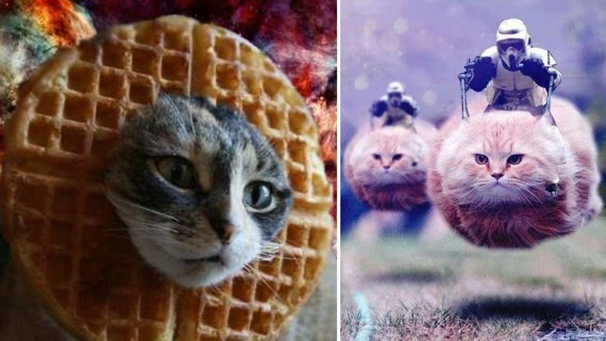 belgians tweet cat pics in following orders not to reveal police action - trending