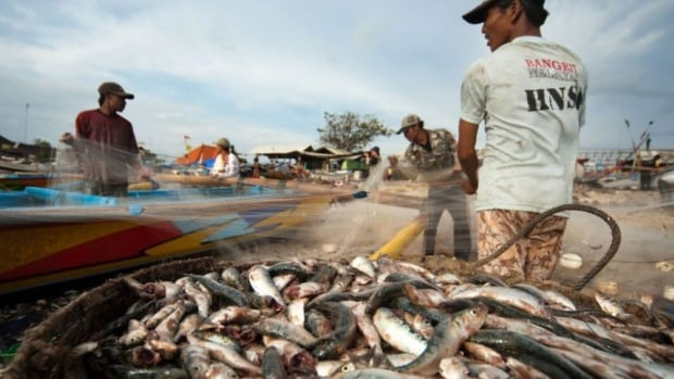 A study done for Swiss food retailer Nestlé found that migrant workers in the Thai seafood industry are often abused and paid so little they cannot refund fees to labour brokers.