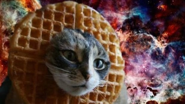 Lessons from the Belgian Cat Meme