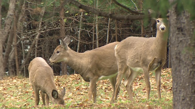 The deer population appears to be at a record low.
