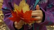 fall leaves kid