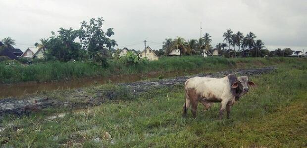 Suriname Farm