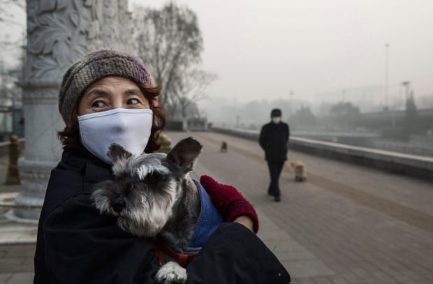 Beijing bad air quality Nov 30 2015 masked dog walker