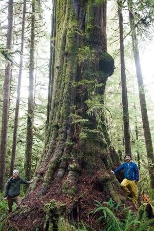 Tall Trees 20151204