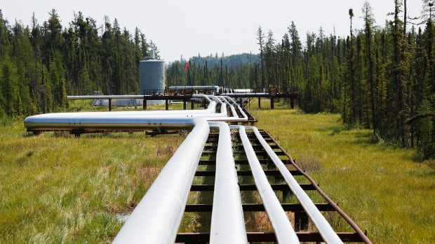 Oil, steam and natural gas pipelines run through the forest at the Cenovus Foster Creek oilsands operations near Cold Lake, Alta. Natural gas futures plunged on Monday to their lowest level since January 2002 on forecasts of continuing mild weather.