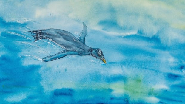 An artist's rendition shows a Stemec suntokum, a type of flightless bird that lived 25 million years ago, discovered by a family out for a stroll on southern Vancouver Island.