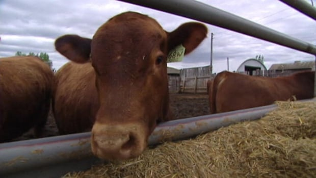 A new report shows livestock export prices are up year-over-year in Canada.