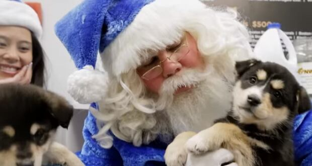 WestJet Santa and puppies!