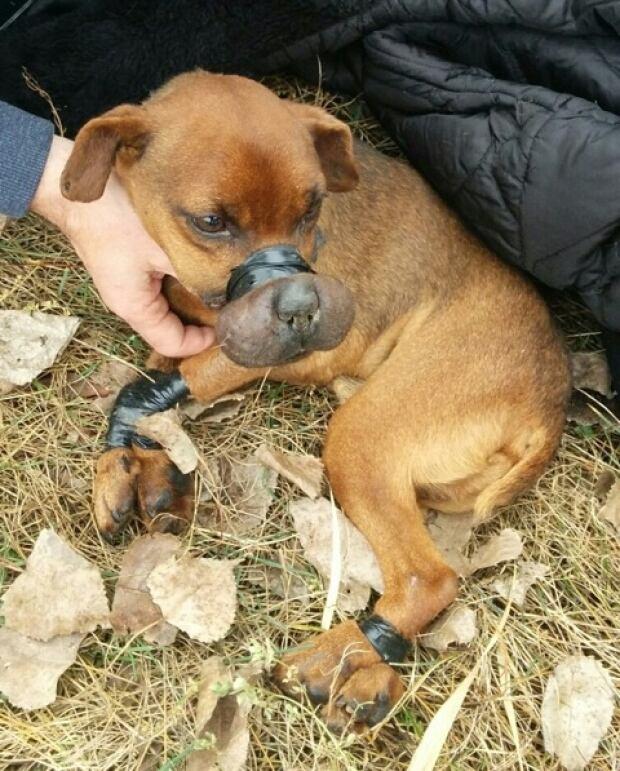 Taped Dog