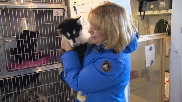 Norah Lake holds one of many husky puppies that make their way to Nunavut's only animal shelter. The shelter in Iqaluit takes in dogs from across the territory.