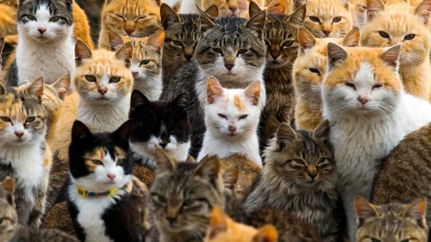 Cats crowd the harbour on Aoshima Island in the Ehime prefecture in southern Japan Feb. 25, 2015. An army of cats rules the remote island in southern Japan, curling up in abandoned houses or strutting about in a fishing village that is overrun with felines outnumbering humans six to one.