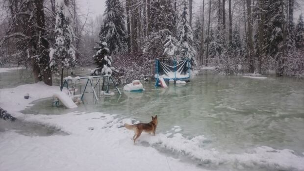 Bulkley River Flooding Backyard too