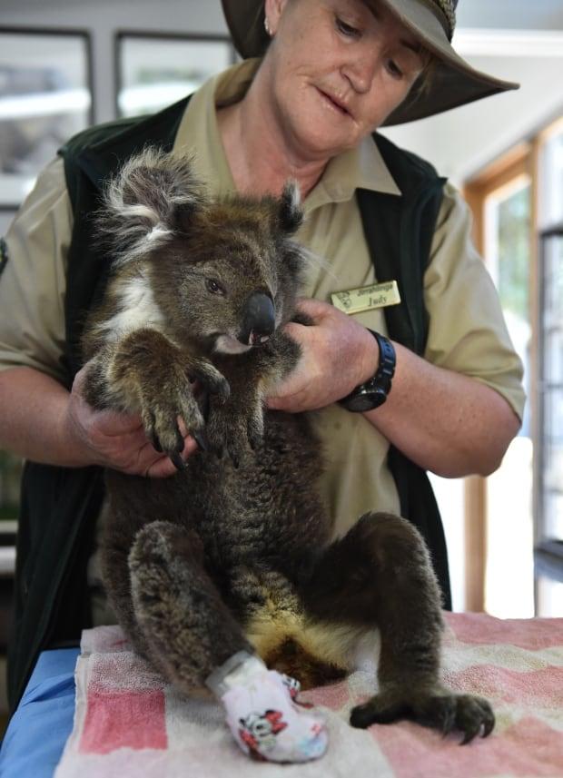 AUSTRALIA VICTORIAN BUSHFIRES WILDLIFE RESCUE