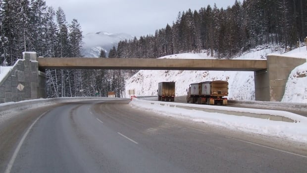 This wildlife overpass was built on Highway 1 near Yoho National Park to try to protect animals from speeding traffic.