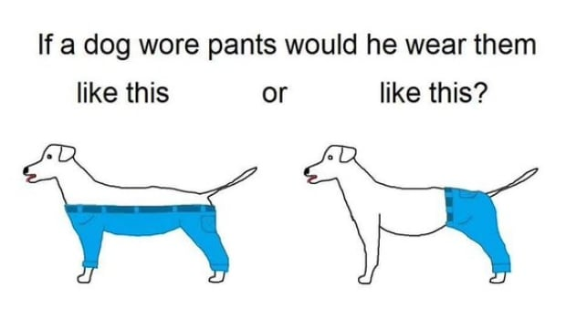 How would a dog wear pants? The internet is being flooded with many, many different answers to that question right now.