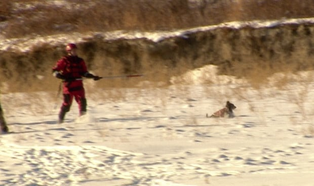 Terra, the rescue dog.