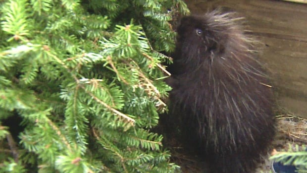 Trees donated to AIWC will help cozy up animal habitats.
