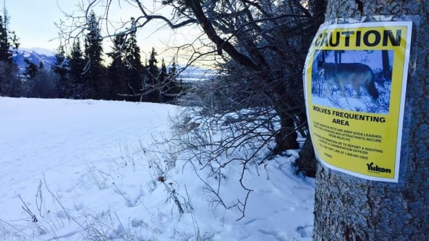 Signs have been posted in Whitehorse neighbourhoods alerting people to the presence of wolves.