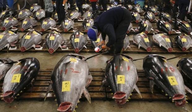 Tsukiji fish market New Years auction Jan 5 2016 tuna for sale