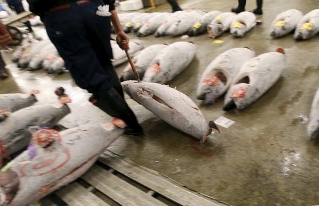 Tsukiji fish market New Years auction fish drag Jan 5 2016