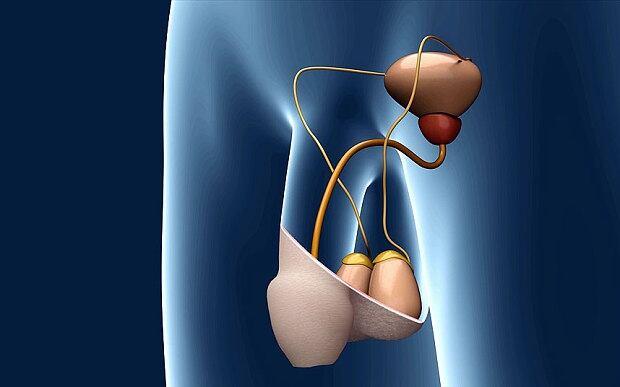 Sperm light switch implant