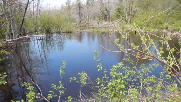 The Nature Conservancy of Canada has reached an agreement to purchase this land in the Percival River area.