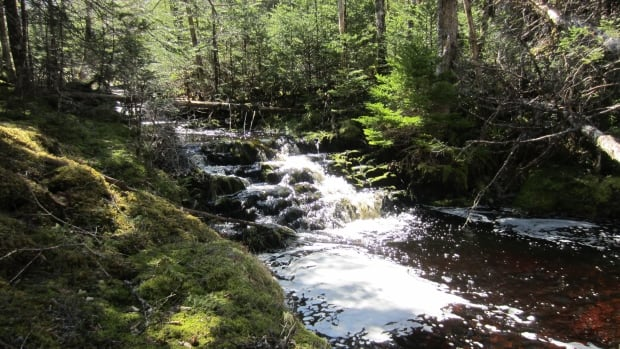 The Nature Conservancy of Canada's Salmonier River Conservation Project aims to protect not only the Salmonier River, but also freshwater wetlands and boreal forest habitats in the region.