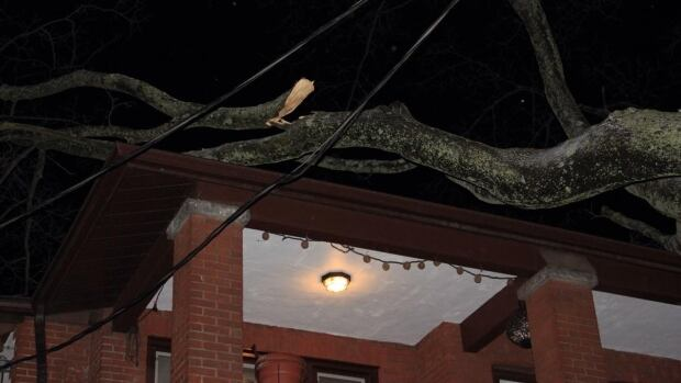 The winds caused branches on trees throughout the city to come down. No injuries to people were reported, according to police.